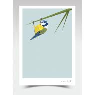 """Barry"" - Blue Tit (Print)"