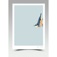 """""""Norman"""" - Nuthatch (Print)"""