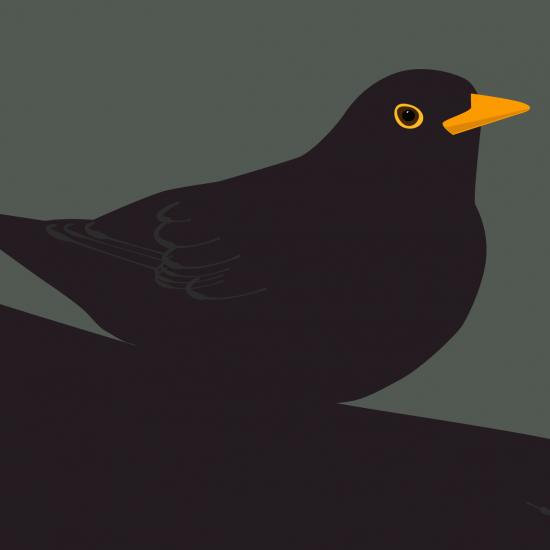 Blackbirds (Print)