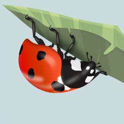 """Dottie"" - Ladybird (Print)"